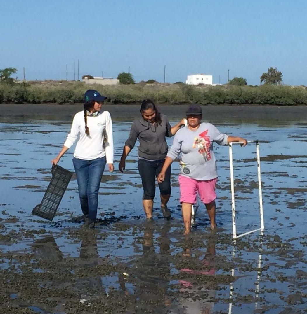 SCPP Mujeres del Mar de Cortés en actividades de monitoreo.